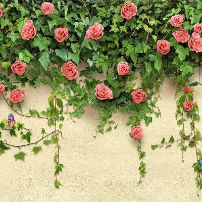 Рябчик-цветы где купить цветы в томск дешевые обои доставка