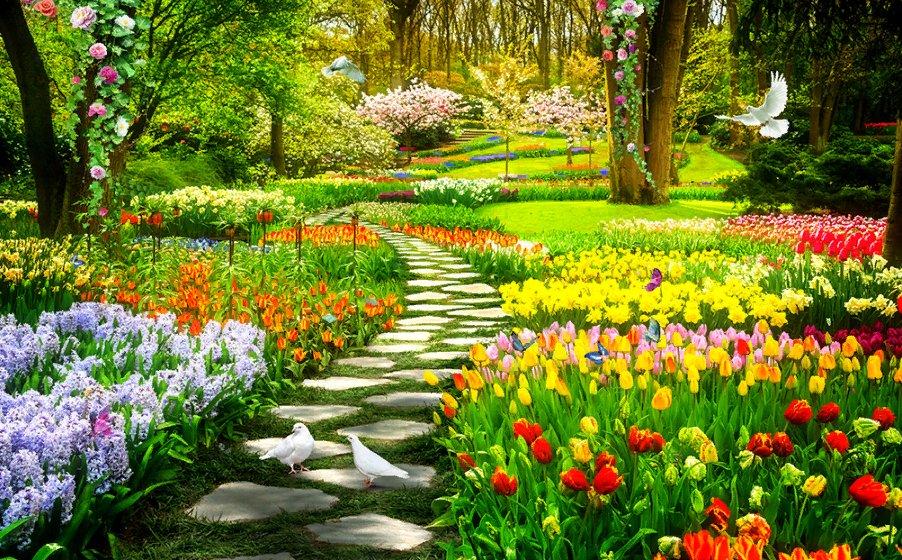 Картинки по запросу Красивый сад