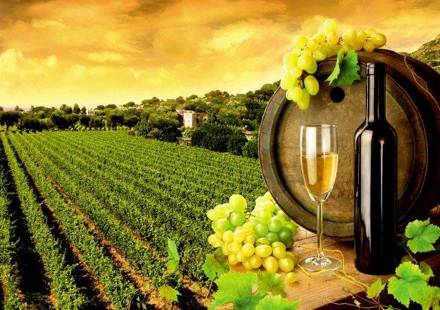 Купить виноградник в дубае недорого стоимость дома в дубае у моря