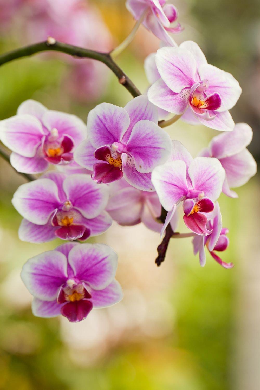 является орхидеи фото на телефон шарф