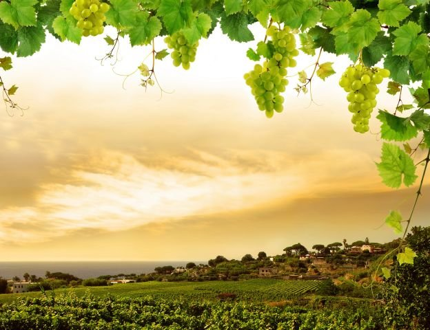 Купить виноградник в дубае недорого купить жилье в португалии отзывы уколы